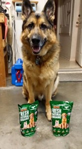 WolfBear with his customized dog food from his dog nutritionist